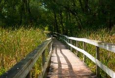 沼泽与芦苇的森林桥梁 库存图片