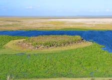 沼泽和大草原 免版税图库摄影