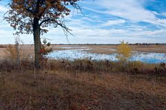 沼泽和孤立橡木在Necedah 库存照片