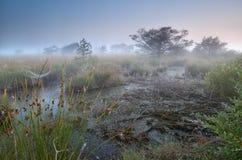沼泽和密集的早晨雾 免版税库存图片