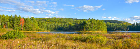 沼泽和森林地原野国家晴朗的路旁视图  温暖的夏日在安大略的加拿大北方森林原野 库存照片