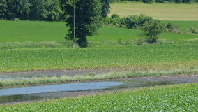 沼泽和草甸 库存照片