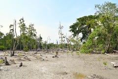沼泽土地和美洲红树森林-大象海滩, Havelock海岛,安达曼尼科巴群岛,印度 免版税库存照片