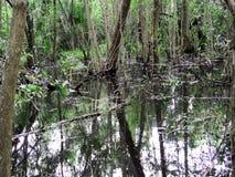 沼泽土地在雨中 影视素材