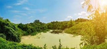 沼泽在一个晴天,一个农村风景-全景 免版税库存图片