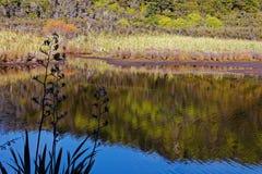 沼泽在亚伯塔斯曼国家公园 库存照片