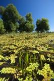 沼泽在克罗地亚 免版税库存图片