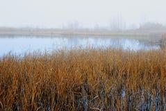 沼泽在冬天 库存照片