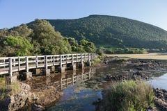 沼泽在坎塔布里亚 库存图片
