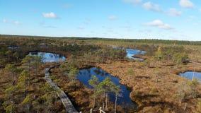 沼泽在拉脱维亚 免版税库存照片