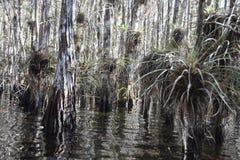 沼泽在有压缩空气装置的沼泽地 免版税库存照片