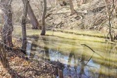 沼泽在森林里在一个晴朗的春日 免版税库存图片