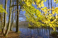 沼泽在森林里 免版税图库摄影