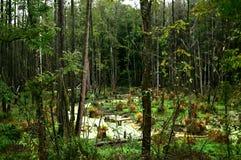 沼泽在森林 图库摄影