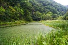 沼泽在森林 库存照片