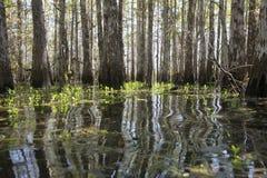 沼泽在沼泽地2 免版税库存照片