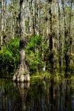 沼泽在沼泽地 库存照片
