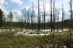 沼泽在波兰 库存照片