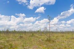 沼泽在白俄罗斯 库存照片