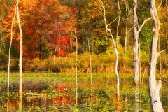 沼泽在秋天 库存图片
