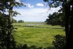 沼泽在缅因 图库摄影