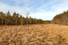 沼泽在芬兰 库存照片
