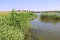 沼泽在草原,多孔黏土rgb 库存图片