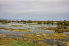 沼泽在西班牙太阳海岸托雷莫利诺斯角安大路西亚 库存照片