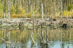 沼泽在阿尔汉格尔斯克州地区,俄罗斯 免版税库存图片