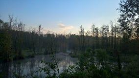 沼泽在黎明 免版税库存照片