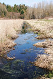 沼泽地、沼泽或者沼泽 免版税库存图片