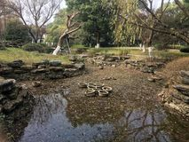 沼泽地公园的角落 库存照片
