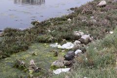 沼泽地区、青苔和草 库存图片