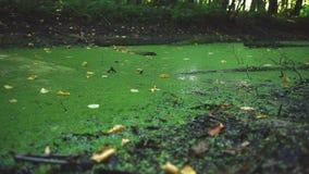 沼泽地区特写镜头 影视素材