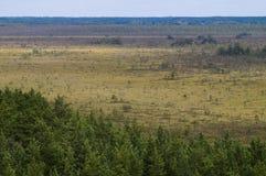沼泽地区鸟瞰图 库存照片