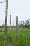 沼泽地叫Shunkunitai 库存图片