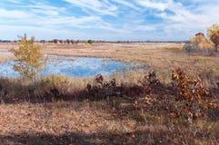 沼泽地和大草原浩瀚在Necedah 免版税库存照片