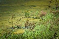 沼泽地和机器寿命 库存图片