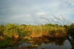 沼泽地国家公园 免版税库存图片