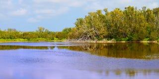 沼泽地国家公园Eco池塘 免版税图库摄影