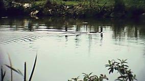沼泽地国立公园1979年 影视素材