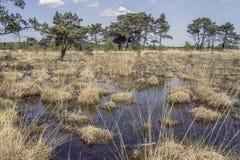 沼泽地在夏天 库存照片
