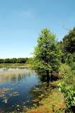沼泽地在得克萨斯美国 免版税库存图片