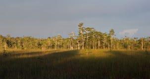 沼泽地在日落的赛普里斯圆顶 免版税库存照片