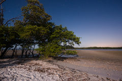 沼泽地在晚上 免版税库存图片