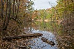 沼泽地在秋天 库存图片