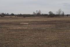沼泽地在秋天 免版税库存照片