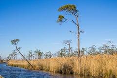 沼泽地在马偕海岛全国野生生物保护区的冬天 免版税库存照片