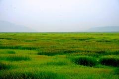 沼泽地在黄河,洛阳 库存图片