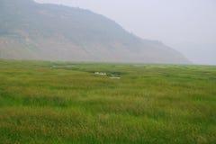 沼泽地在黄河,洛阳 库存照片